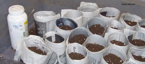 Paper pots from newspaper for planting