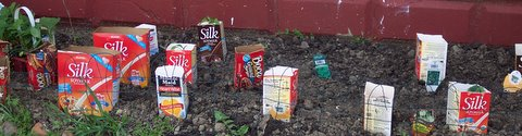 Silk Soymilk containers used to protect plants.