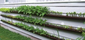 suzanne forsling grows a great gutter garden